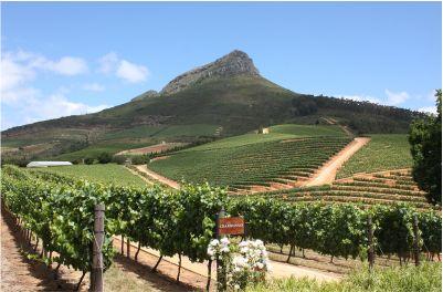 wine lands