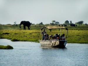 chobe river boat cruise elephant