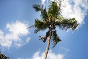 zanzibar palm tree climber