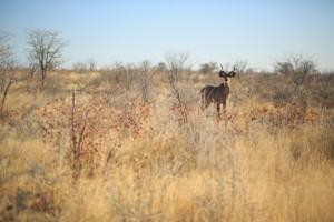 antelope safari south africa