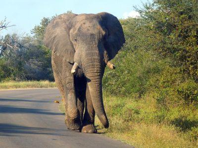 Safari Tours on a Budget | South Africa Safaris | Ashanti Travel