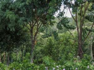The Karura Forest nairobi