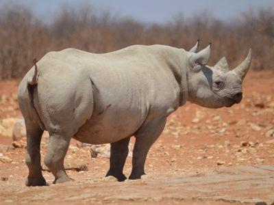 Rhino budget safari