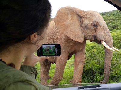 addo elephant park closeup