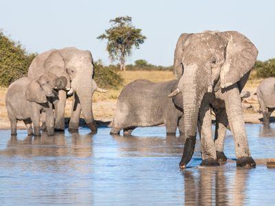 elephant budget safari