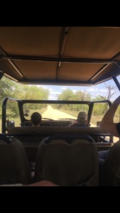 jeep safari