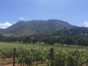wine estate constantia