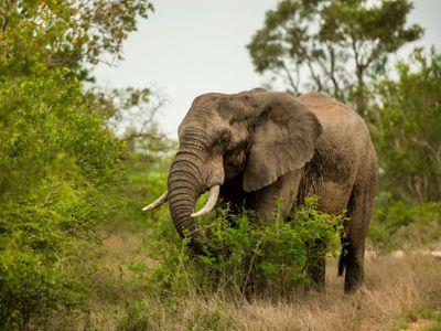 Elephant in Addo Elephant National Park