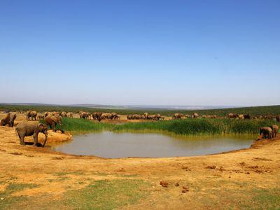 Addo Elephant National Park Watering Hole
