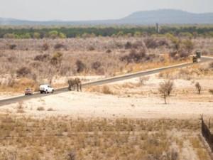 Elephnt Etosha Namibia