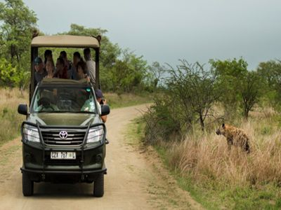 Kruger National Park Safari South Africa