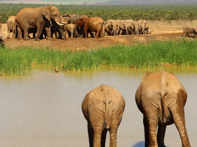 Watering Hole Addo Elephant National Park