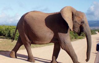 Budget Safaris Africa | Adventure Safaris | Cheap Safari Holidays