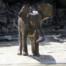 Baby Elephant Kruger Park