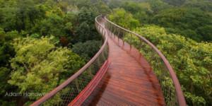 wooden bridge over trees