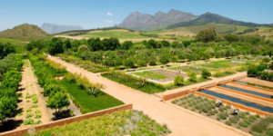 garden at Babylonstoren