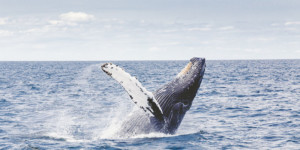 whale boat watching South Africa