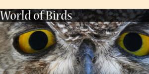 upclose owl