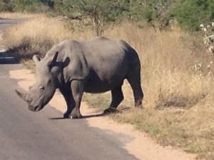 Rhino on a road