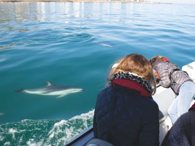 people looking at a dolphin