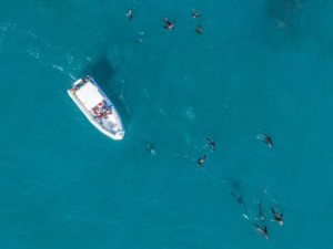 Drone view of a boat and seals in the ocean
